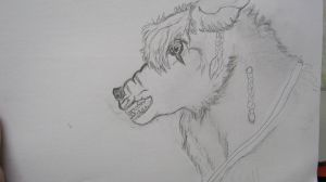Wolf Wip 4 by ponygirl74