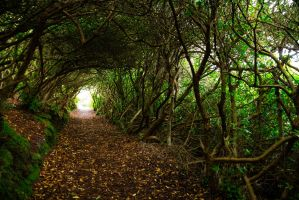 Tunnel of Trees by AcridMonkry