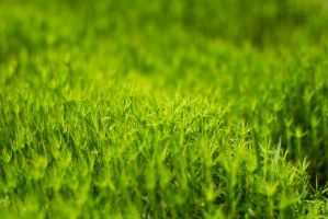 The soft green by D3PRO