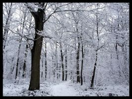 Snow in the wood 2 by philcopain