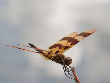 Halloween Pennant 2 by Windthin