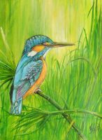 Kingfisher by afsimart