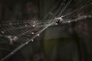 spider7 by hubert61