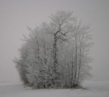 Early Evening Winter by pullingcandy