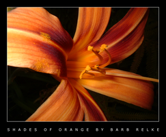 Shades of Orange - A Lily by redbandana