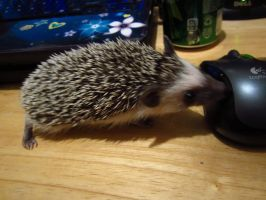 Snickers Licking A Mouse by cadillacphunque