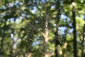 The spiders web by poison-is-my-koolaid