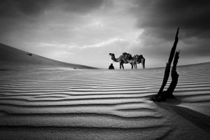nomad 2 bw by almiller