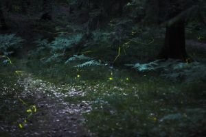 Fireflies II by Quit007
