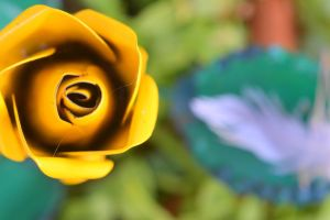 Yellow Rose of Texas by SharPhotography