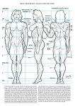 Female Muscle Ideal Proportion by Bambs79