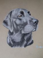 black labrador by Vitadog