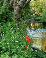 Poppies By The River by wormwood-doll