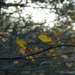 autumn leaves by Janine-Autumn