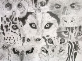 Animal Eyes by YouMePencilPaper