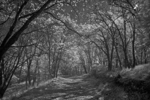 Westerly Wood by eccentricphotography