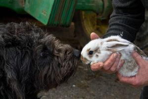 The dog and the bunny by Mimgroth