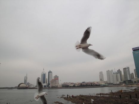 Seagulls Mid-flight 2 by Vermouth1991