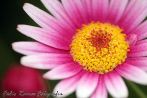 Yellow Pinky Flower by moguinho