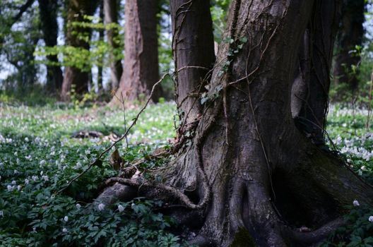 Back to the Roots by Lodchen-Photography