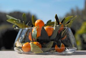 clementines by 1014101