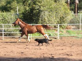 Exercising Two at Once by Horsesdontlie