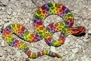 Rainbow Snake by ScreamEmotion