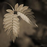Baby Fern by Oarthias