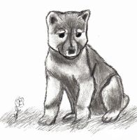 wolf pup by darth-tinman