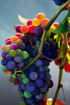 Still Life Practice - Whimsical Grapes by Vesperius