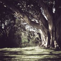 Dappled by andrewkevin