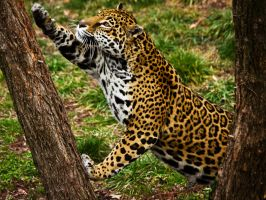 jaguar172 by redbeard31