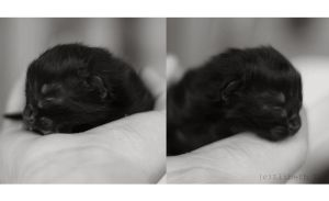 Newborn Kitten by xmisslizx