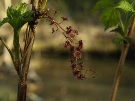 Danger: Live Currant by Line-of-Birds