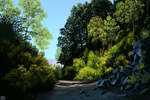 Forest track (painting) by Nothofagus-obliqua