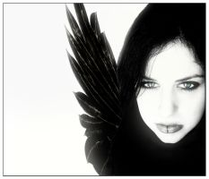 Light of the Black Fairie by offshore
