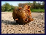 Rotted apple by Princess-Amy