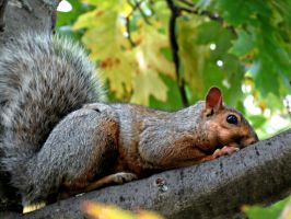 Squirrel Watching Me... by Michies-Photographyy