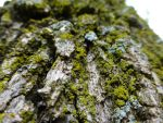 Moss On A Tree by salvadorsam