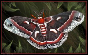 Cecropia Moth by Blattaphile