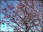 Red Berry Tree by IAmArkain
