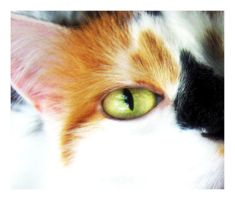 Calico by KirstenE