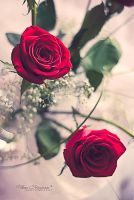 Red Roses II by LoMiTa