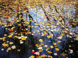 floating leaves by MollyKaiser13