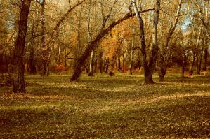 Glade in the woods by Tumana-stock