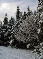 Wintery scene 2 by LucieG-Stock