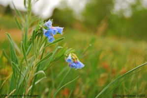 Red, Blue, and Green by blutesauger