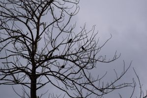 Birds on dead tree branches by cheaterboy-A
