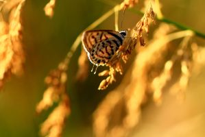 Butterfly Hues by hannajohn