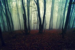 Misty Wood... by Samantha-meglioli